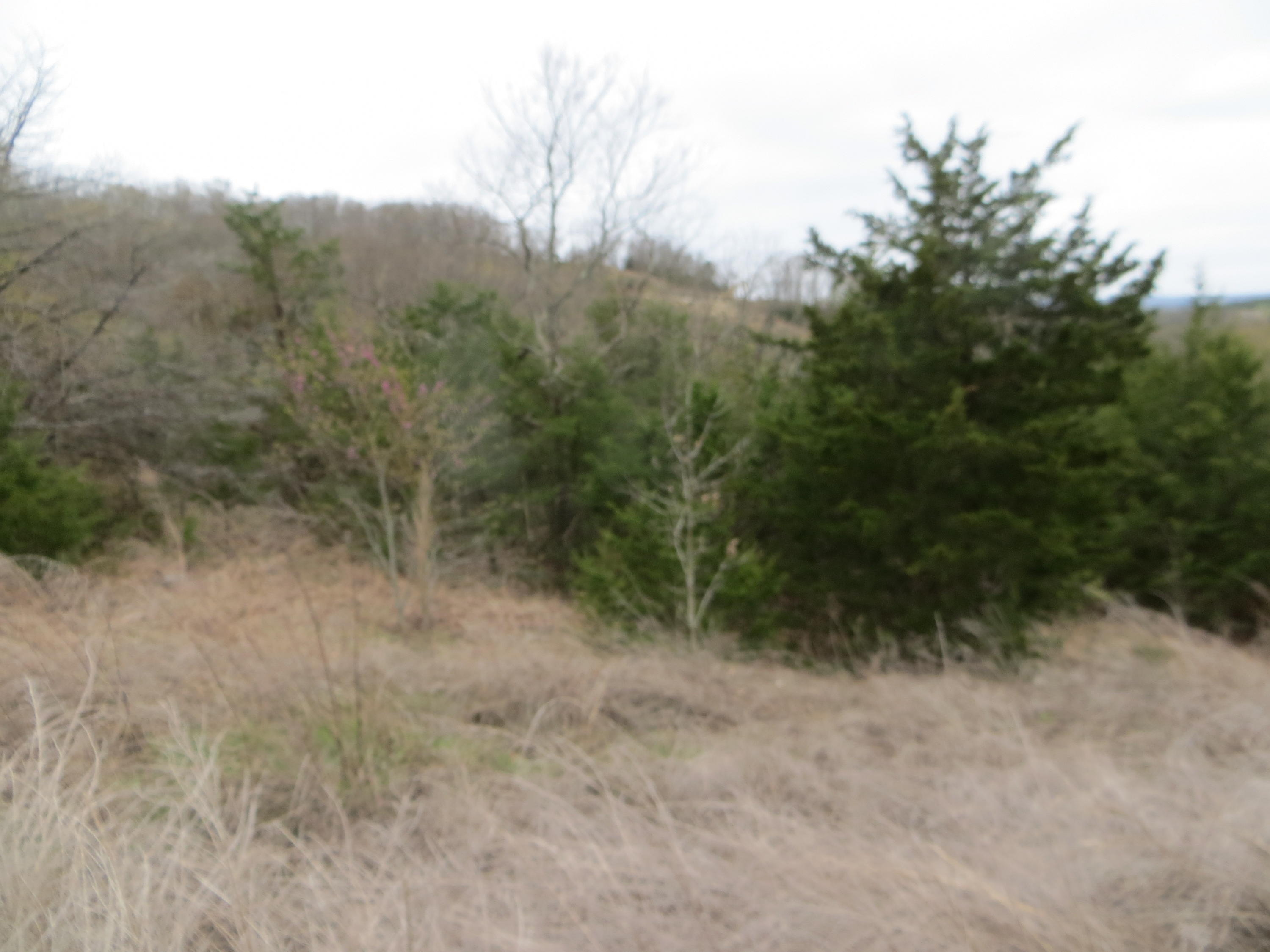 Lot 13 Hummingbird Hills Lane Branson, MO 65616