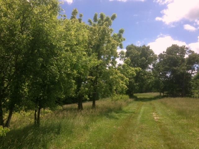 Tbd Oak Grove Lane Galena, MO 65656