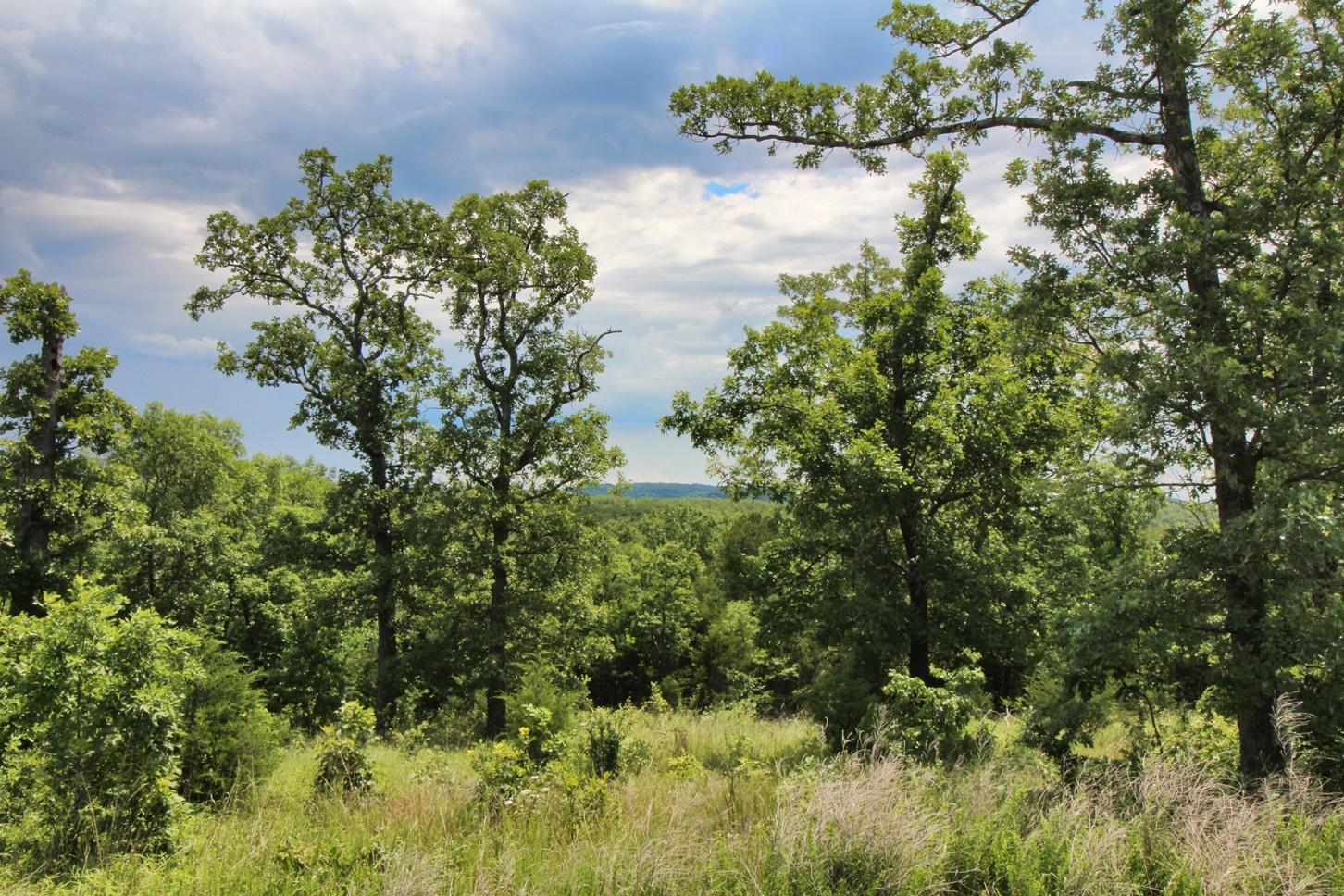 Lot 301 Forest Lake Branson West, MO 65737