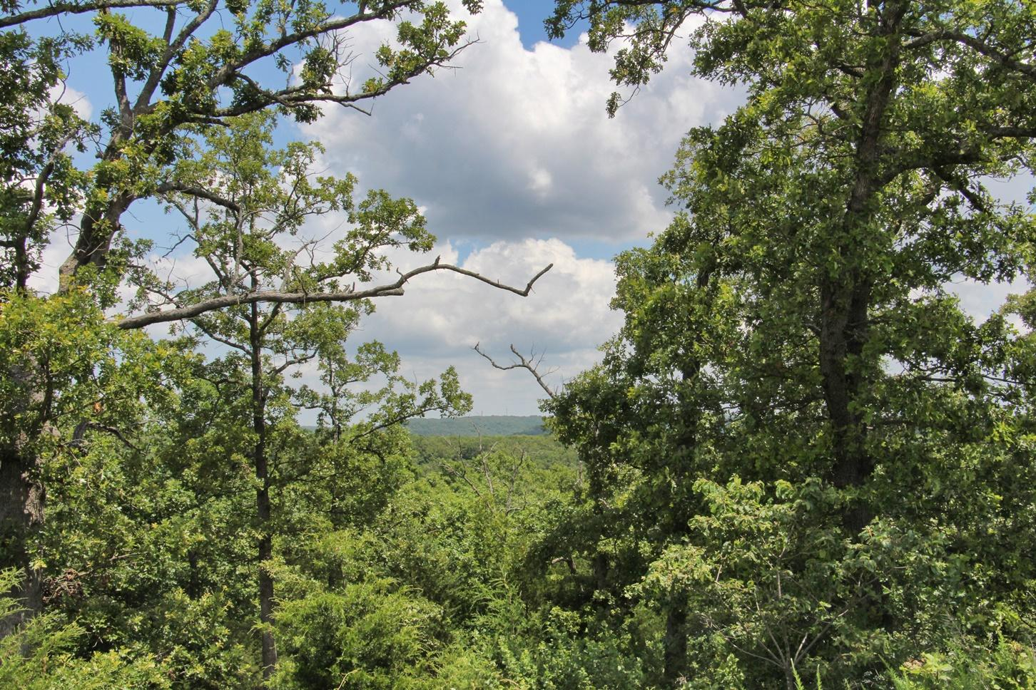 Lot 300 Forest Lake Branson West, MO 65737