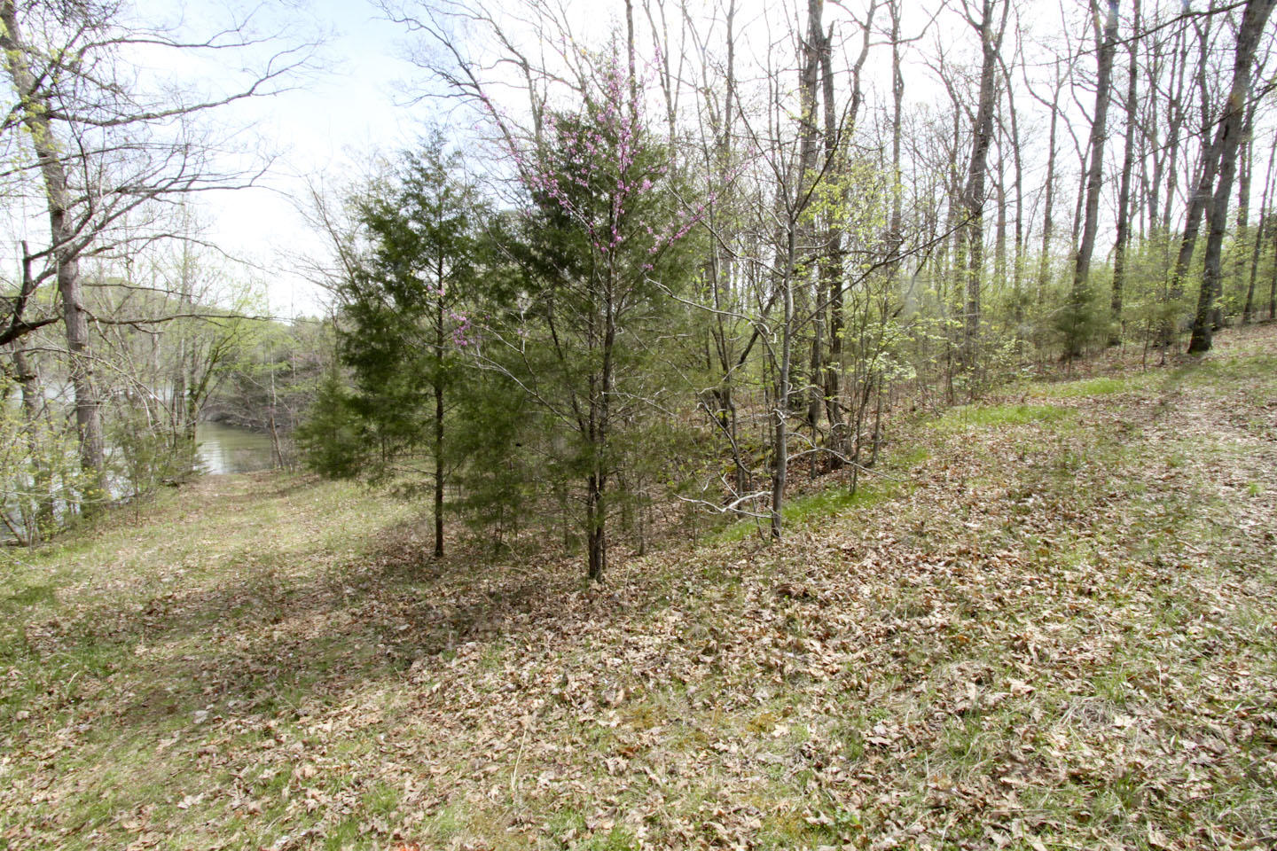 407 Eagle Landing Road Cape Fair, MO 65624