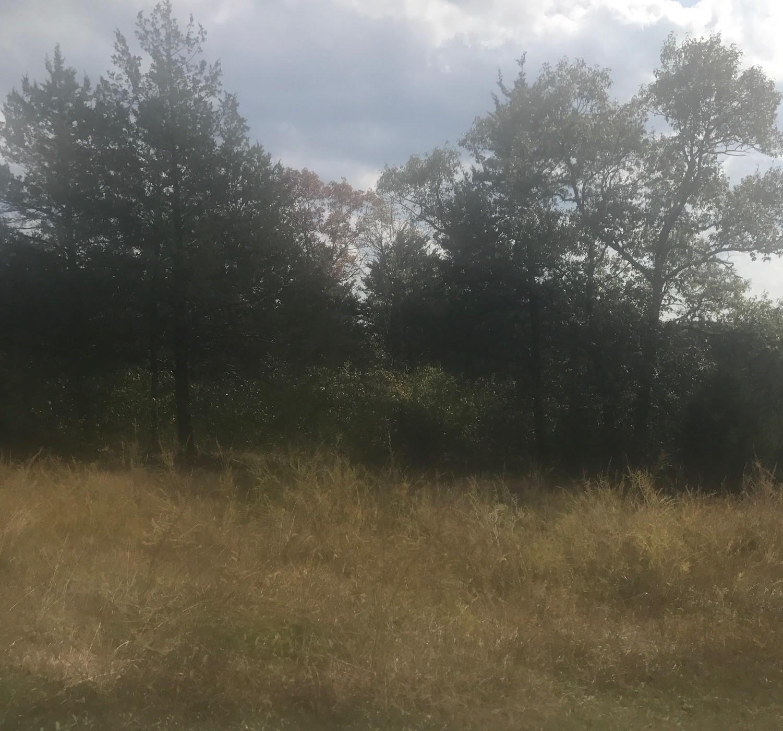 280 Mills Hollow Road Branson, MO 65616
