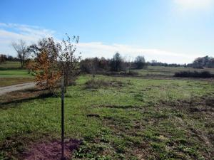 Tract #4 Dade Farm Road 186, Ash Grove, MO 65604