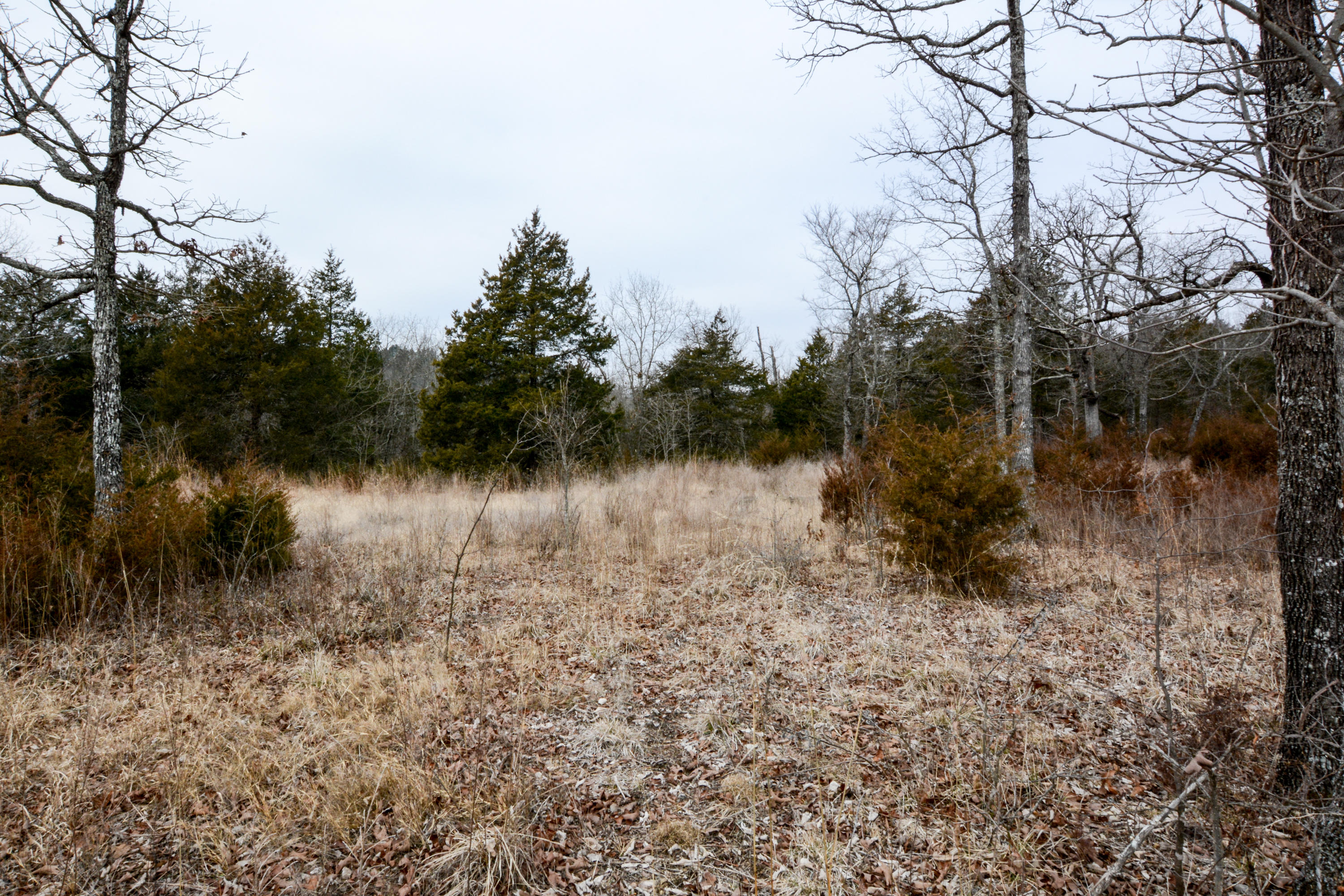 Lot 57 Forest Lake Drive Branson West, MO 65737