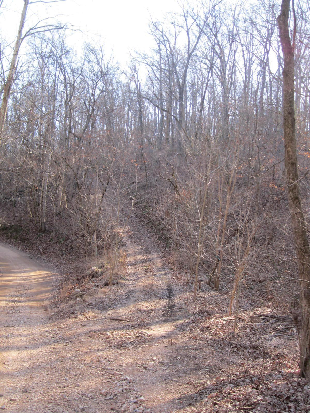 Misty Springs Road Galena, MO 65656