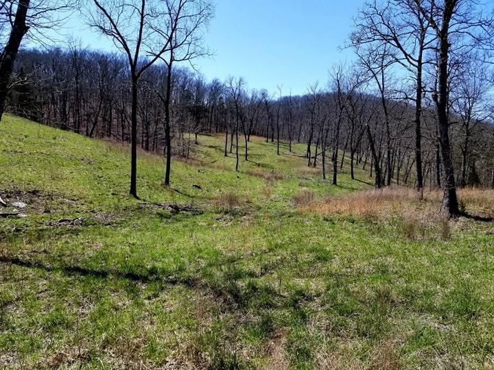 Tbd Tilden Road Reeds Spring, MO 65737