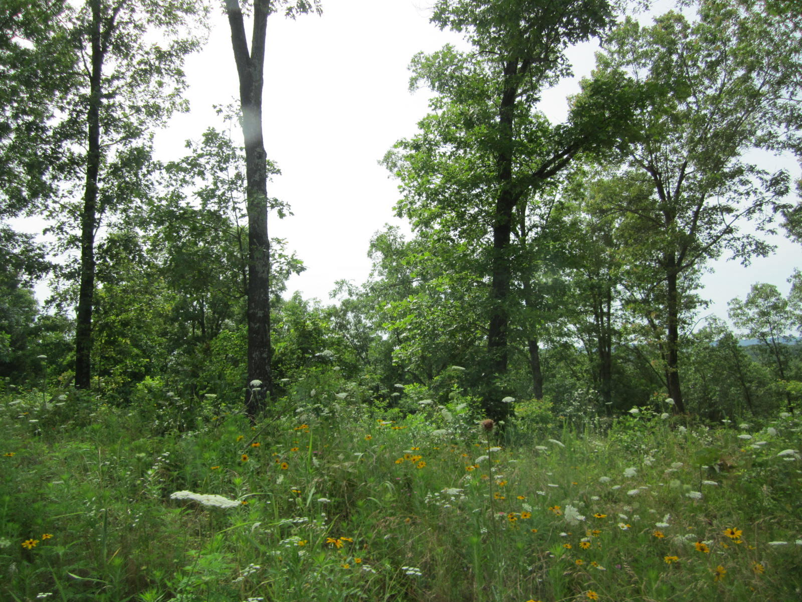 Lot 4 State Highway Ee Aurora, MO 65605