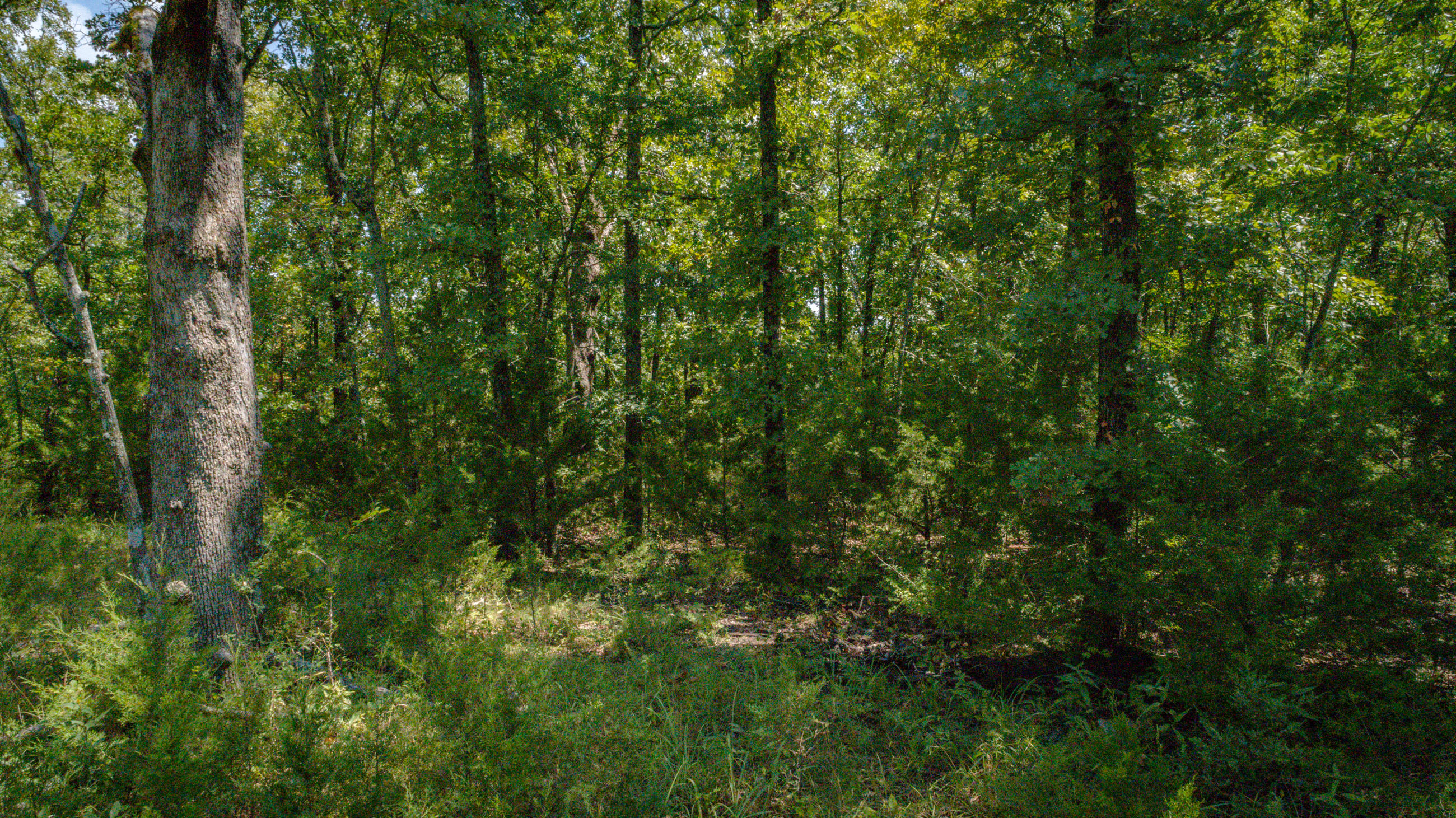 Lot 202 Forest Lake Drive Branson West, MO 65737