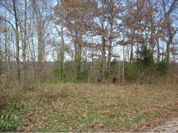 Lot 20 Rabbit Run Cape Fair, MO 65624