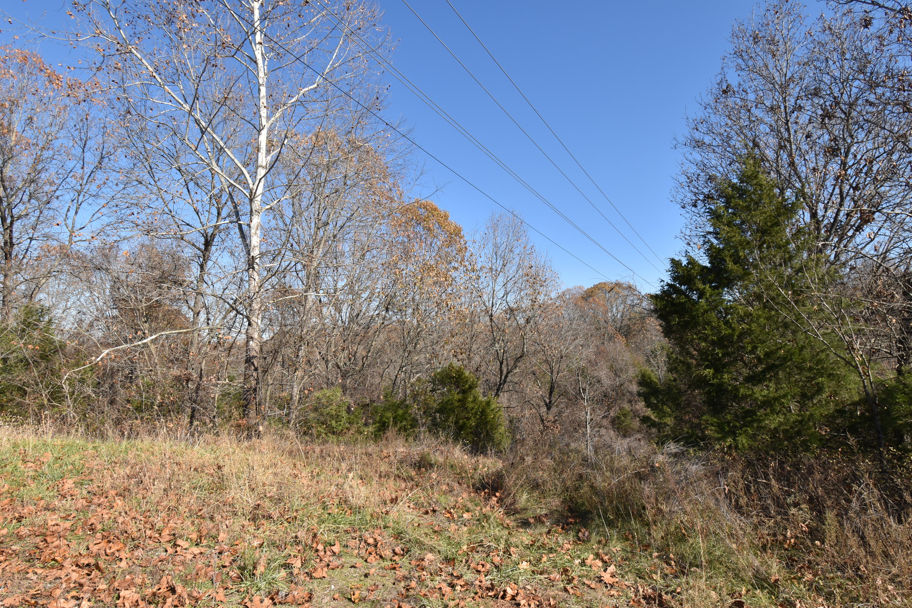 Lot 67 Lost In Woods Lane Cape Fair, MO 65624