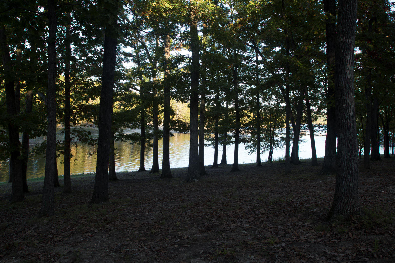 26 Cave Lane #Cabin 23 Indian Point, MO 65616