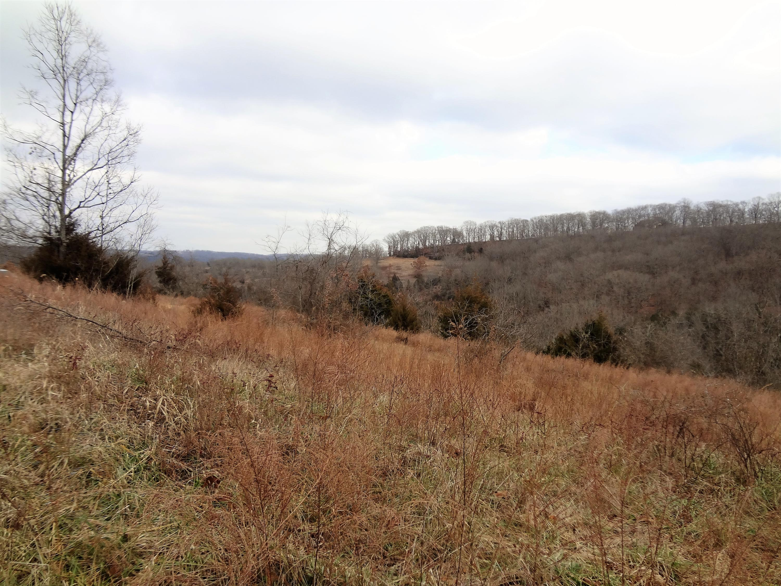 280 Jacks Hollow Road Walnut Shade, MO 65771