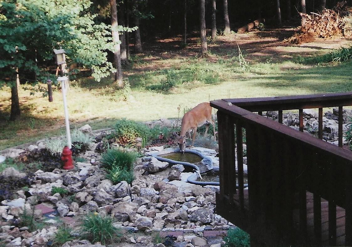 1628 Bee Creek Road Branson, MO 65616