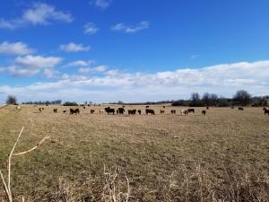 3456 Farm Rd 39, Ash Grove, MO 65604