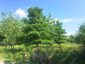 000 Old Well Lane - Lot 12