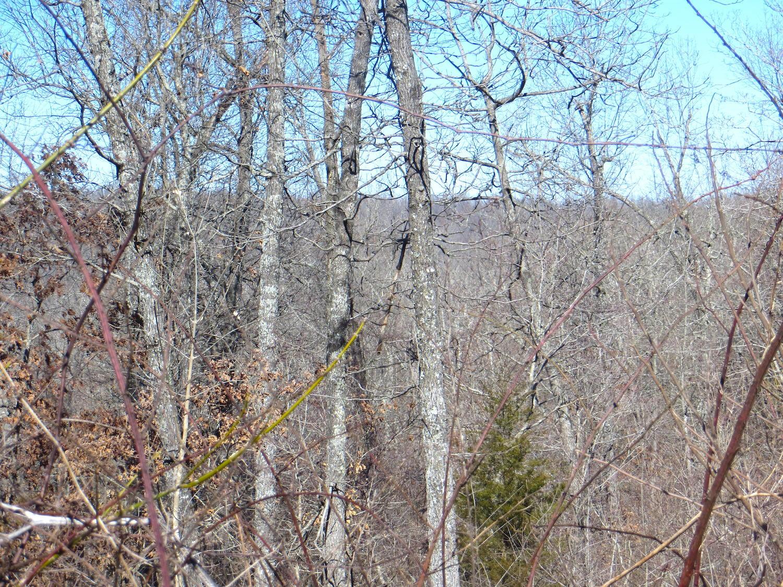 Tbd Wedgefield Trail