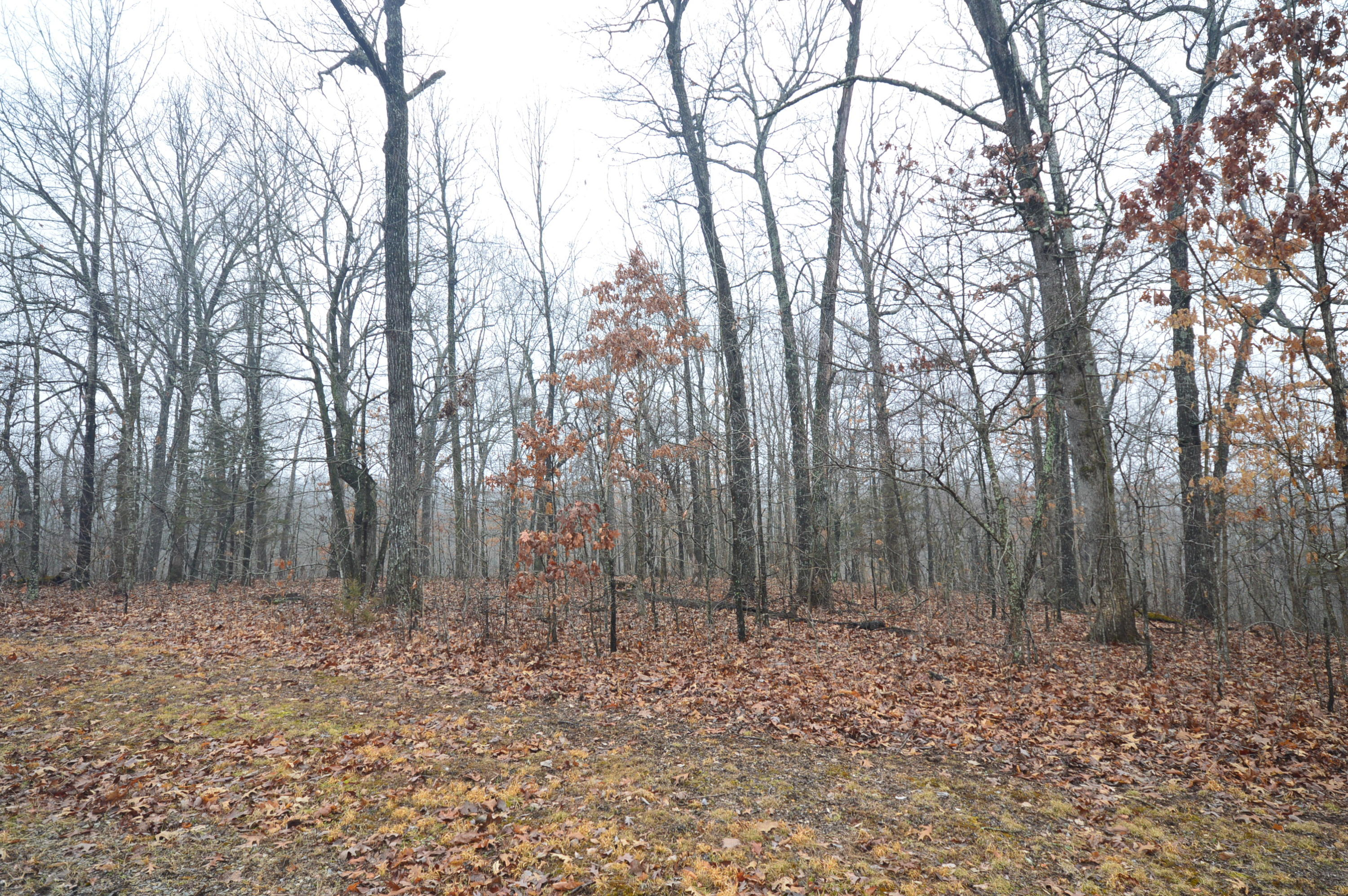 Lot 48 Forest Ridge Road Rogersville, MO 65742