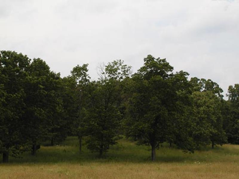 Tbd Highway West Plains, MO 65775