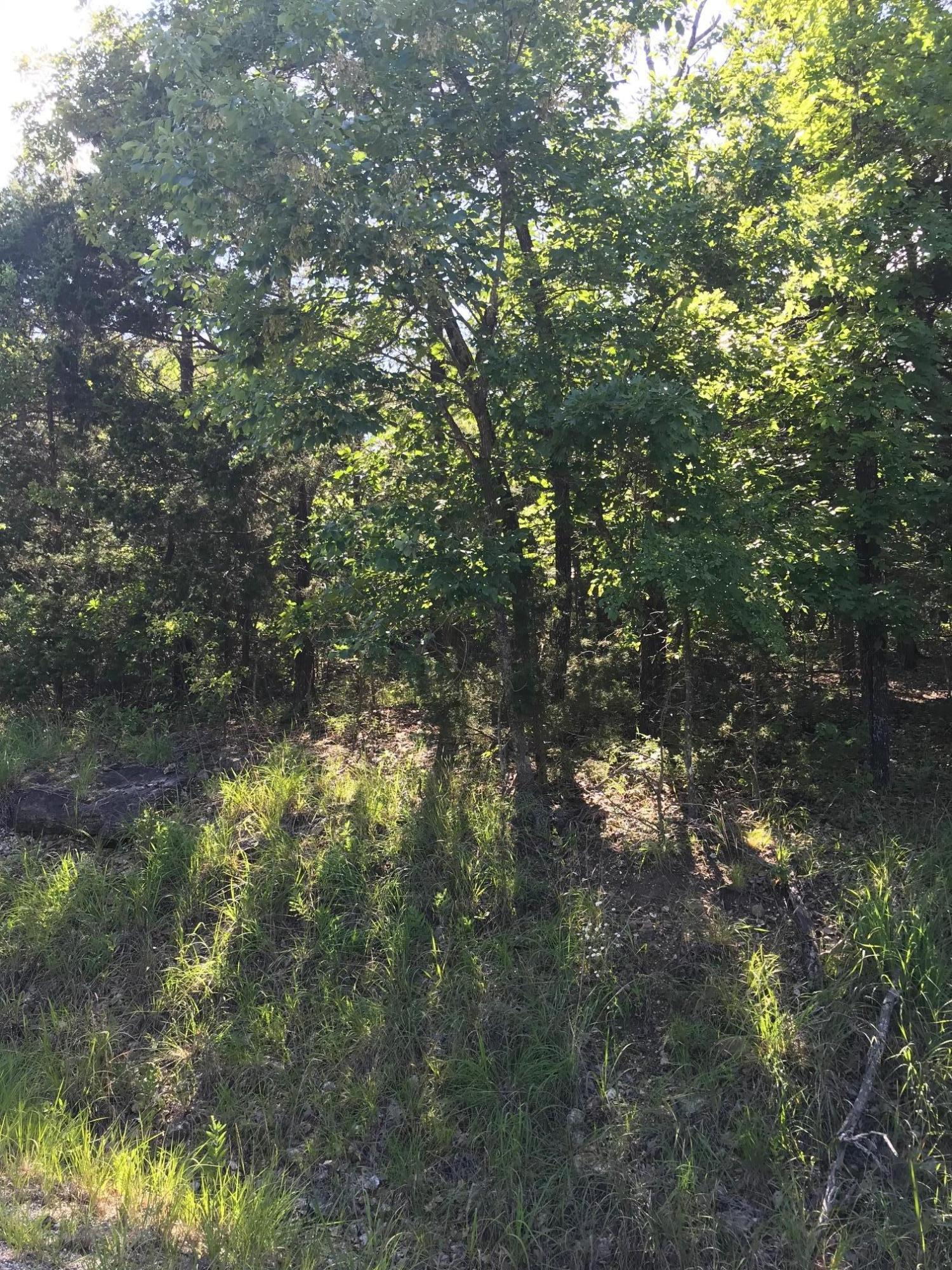 Lot 1 Ozark Hollow Road Blue Eye, MO 65611