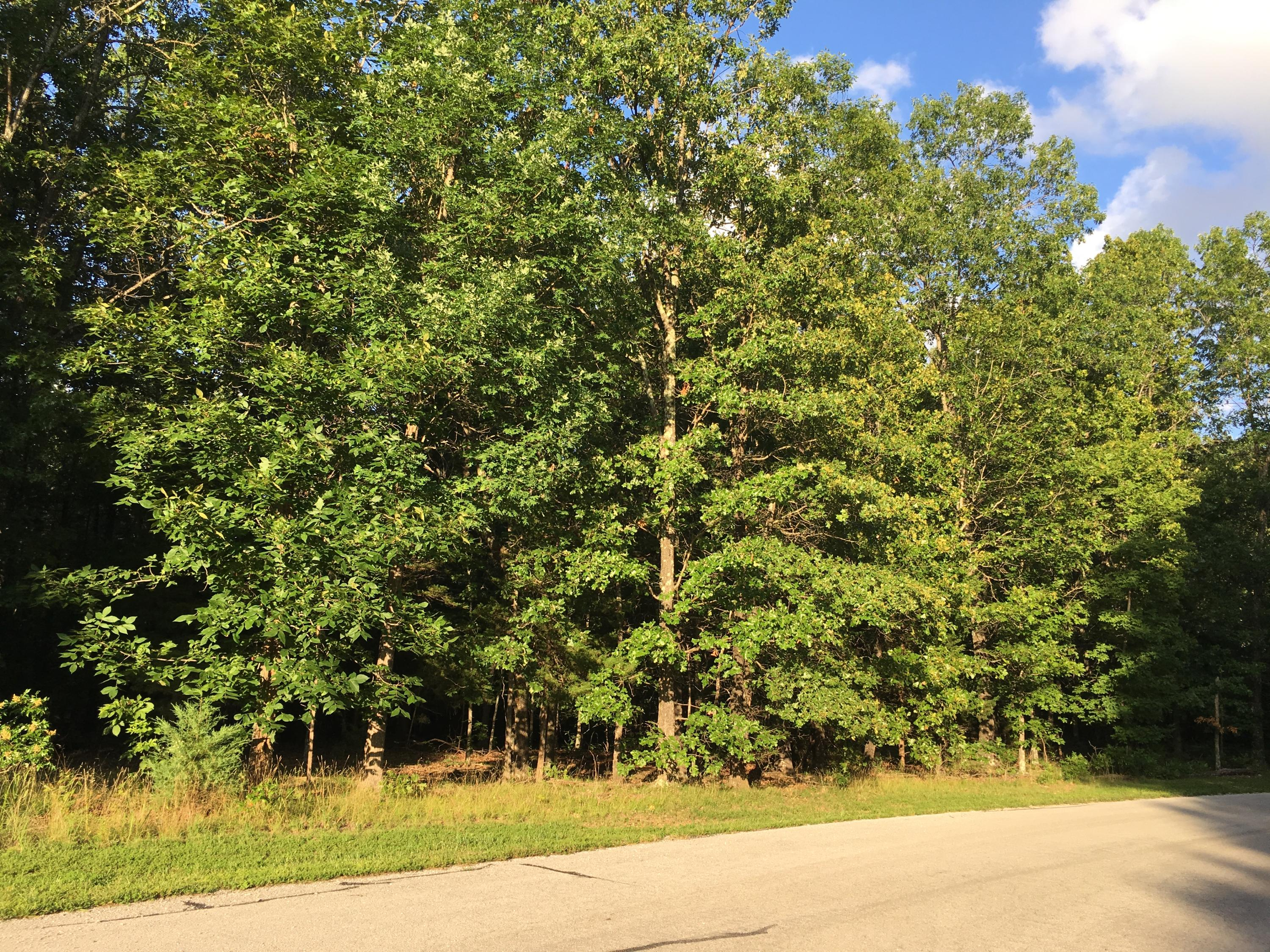 Tbd South Wood Road Rogersville, MO 65742