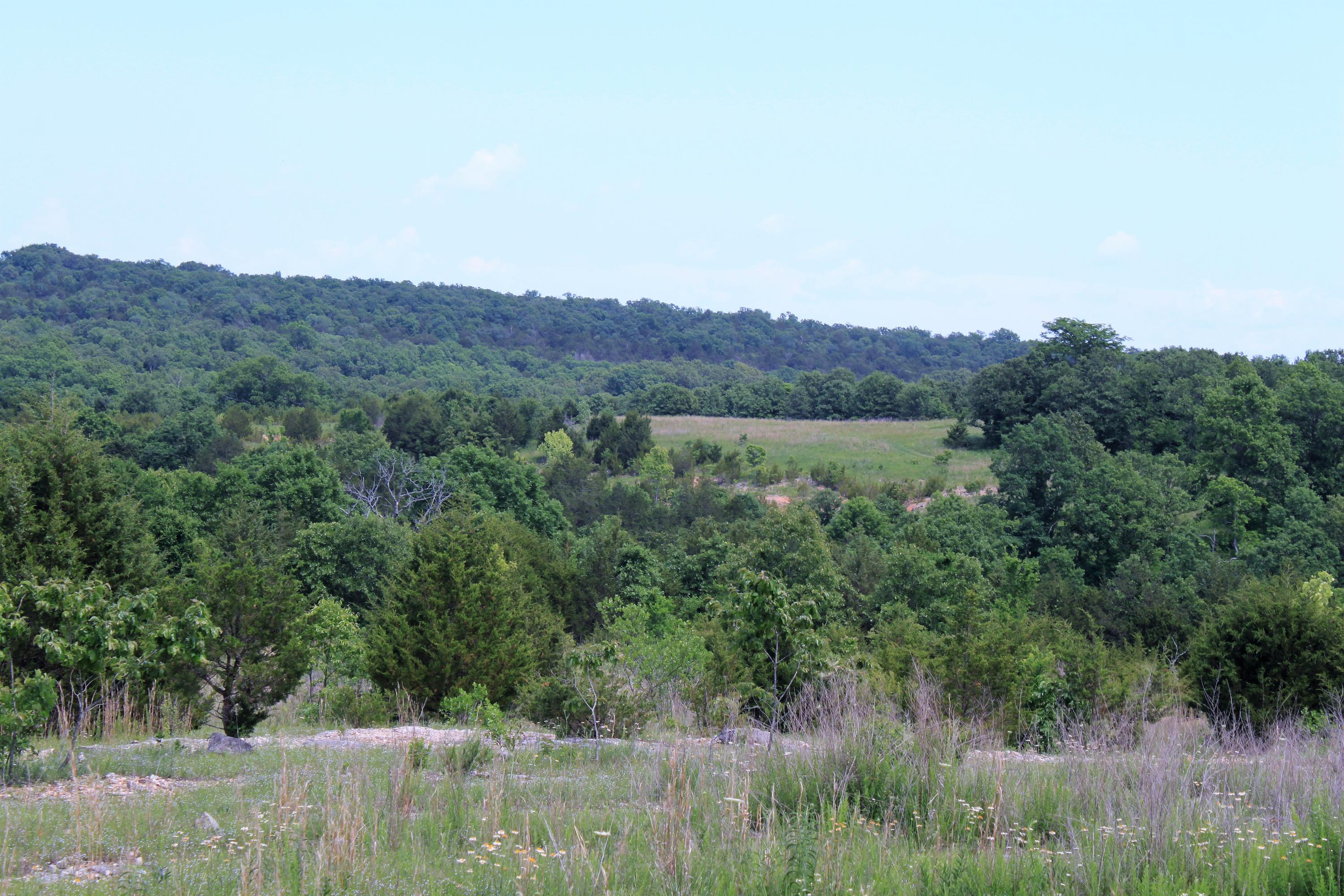 Tbd State Hwy Jj Hollister, MO 65672