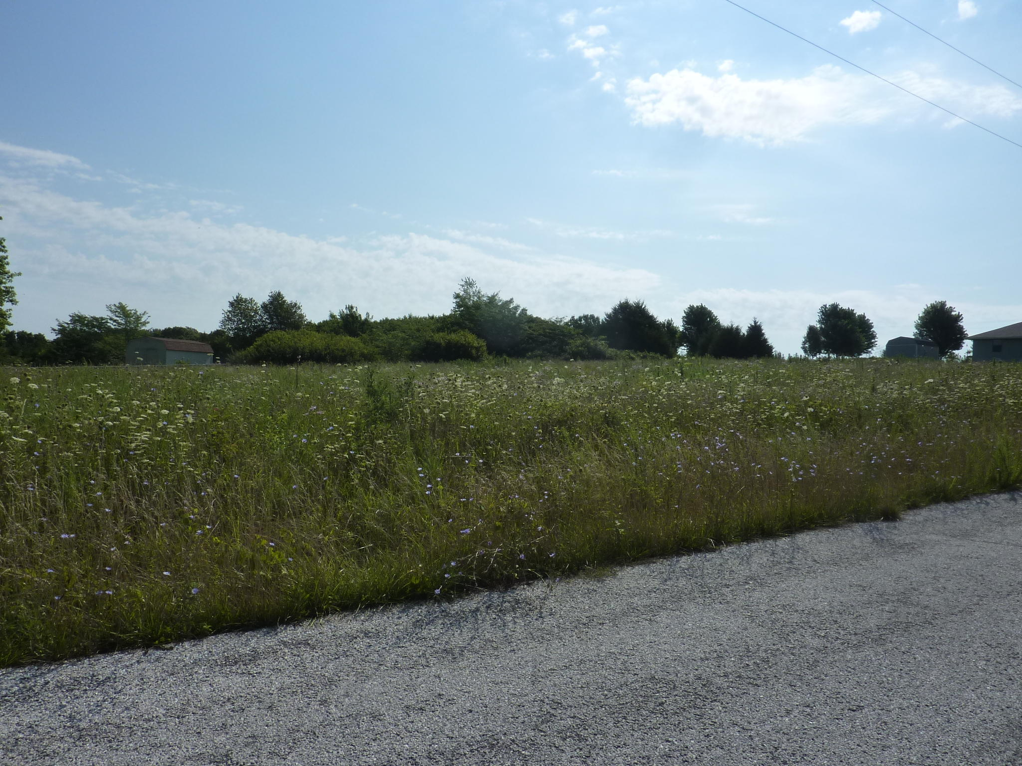 Tbd Country Meadow Road Highlandville, MO 65669