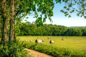 Cattle ranch bottom field