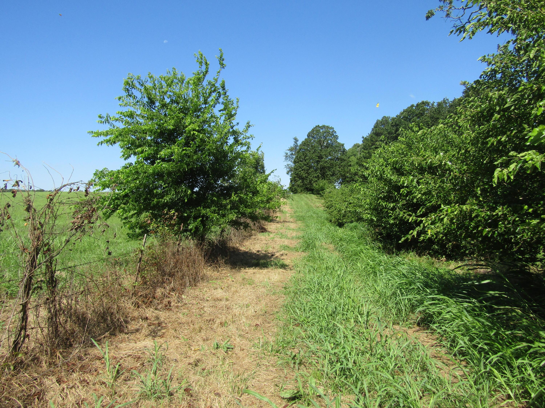 0000 County Road Dora, MO 65637