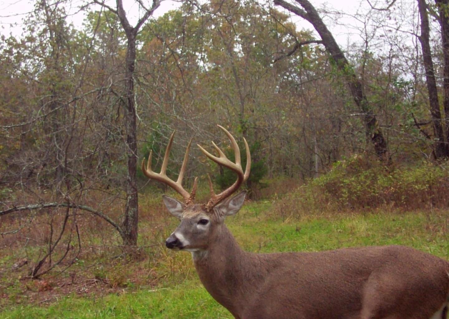 596 Little Creek Road Mountain Grove, MO 65711