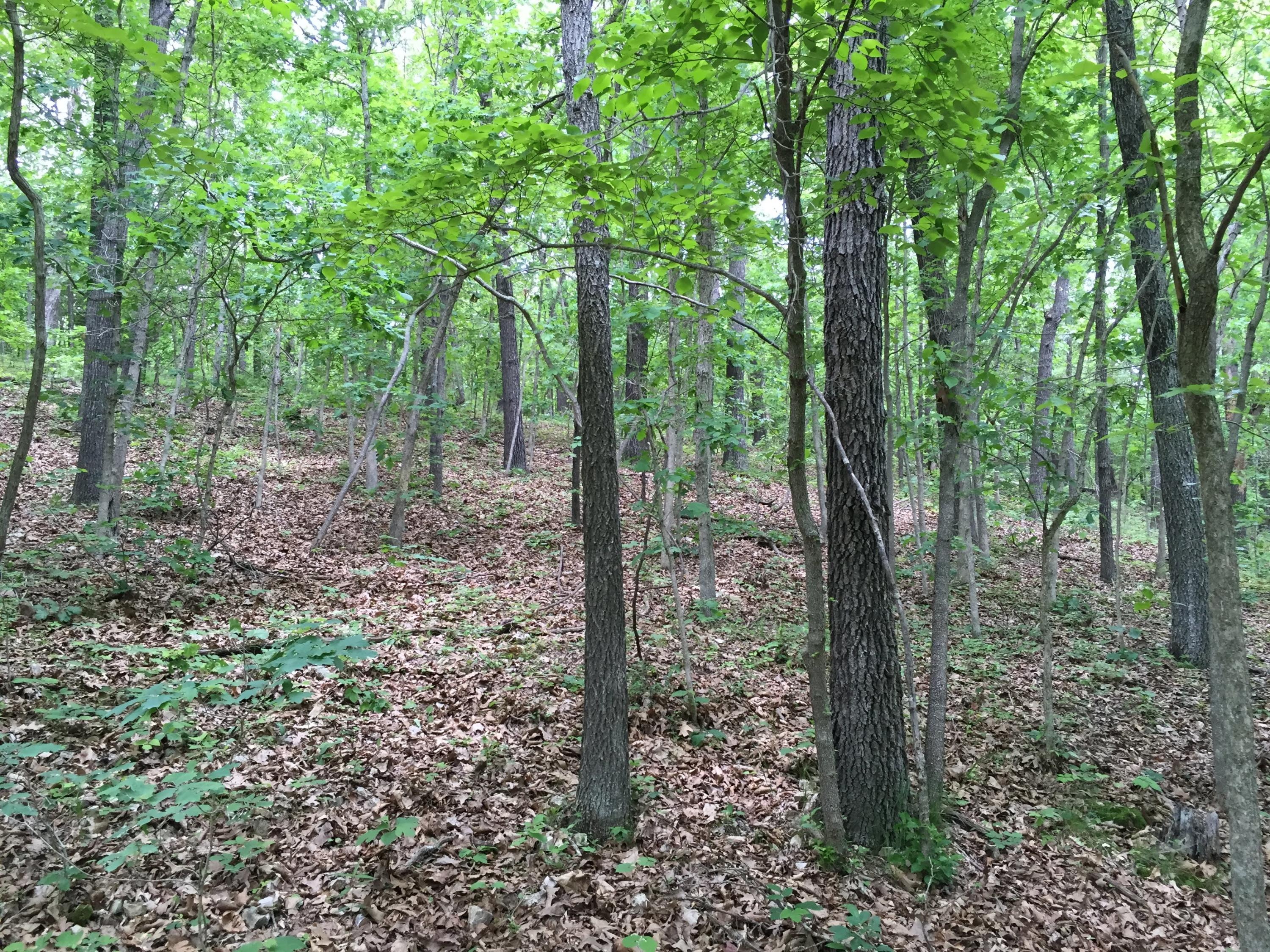 Lot # 84 North Woods Road Rogersville, MO 65742