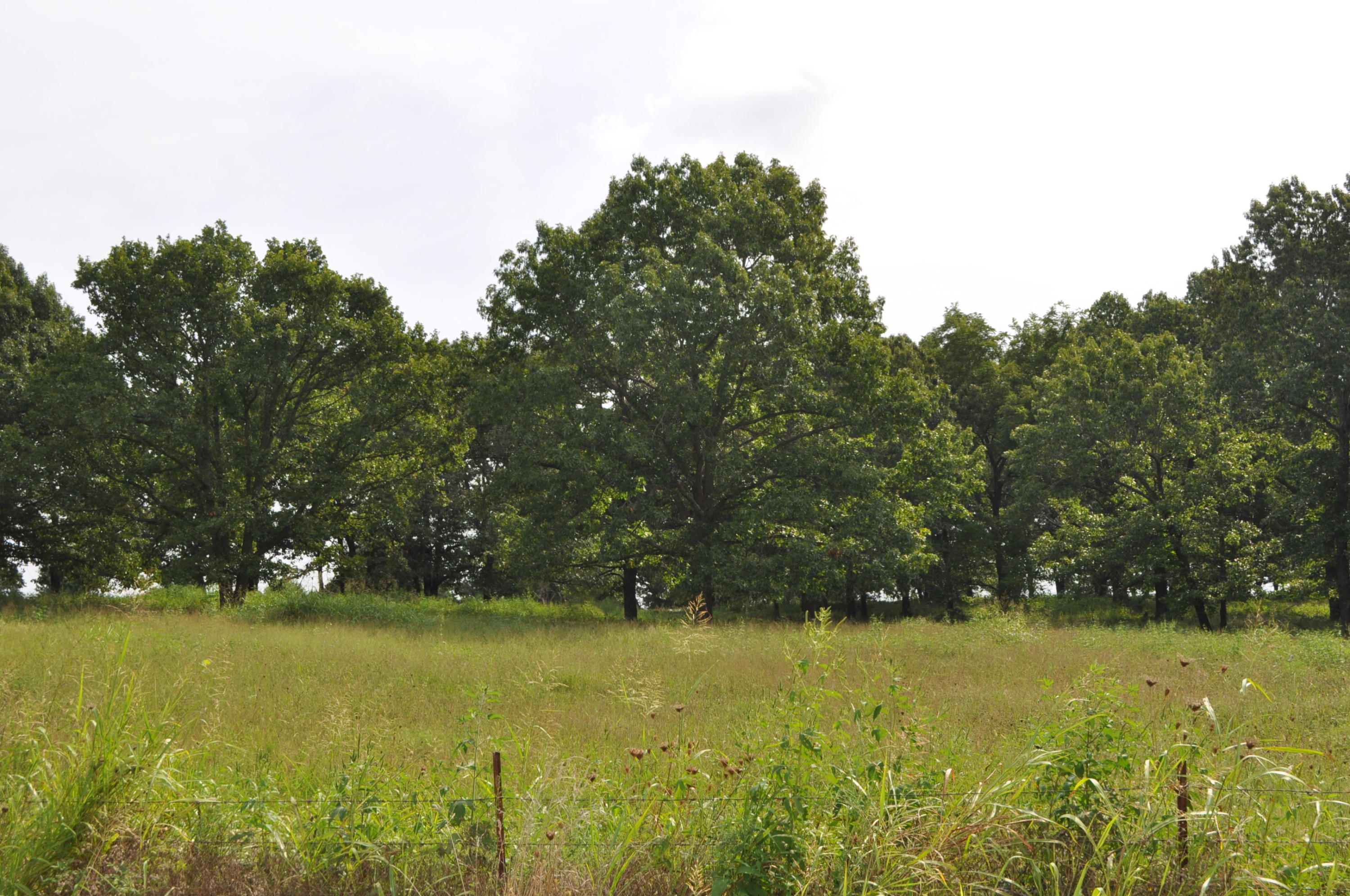 Tract-1 South State Highway Ff Battlefield, MO 65619
