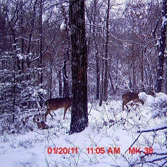 Tbd Bear Hollow Road Jane, MO 64856