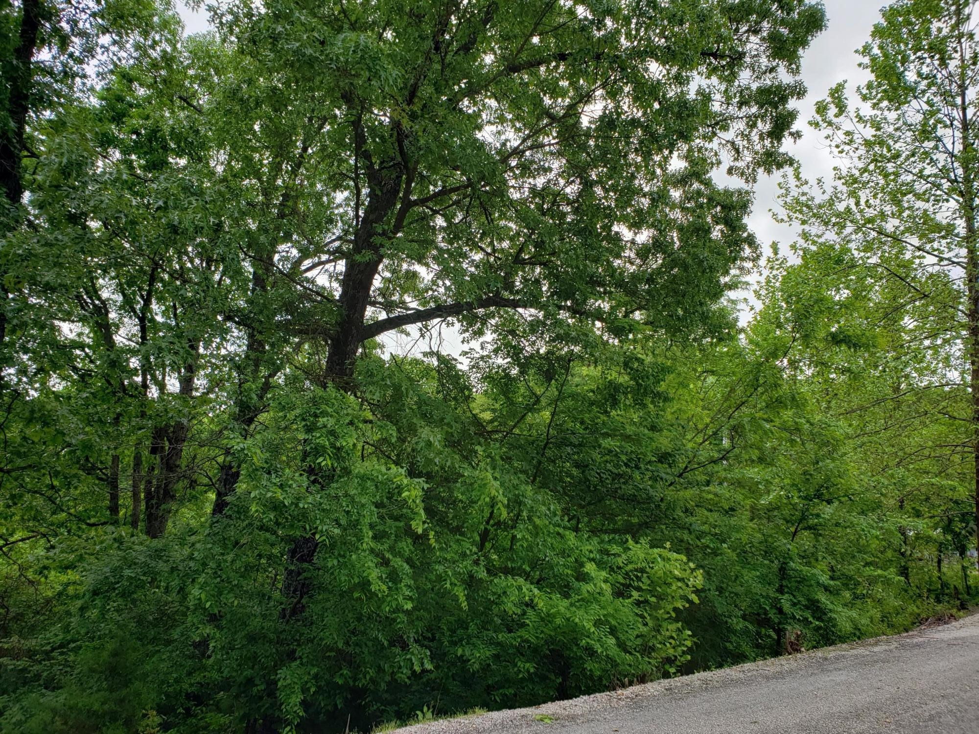 000 Oak Harbor Estates, Joe Bald R Kimberling City, MO 65686