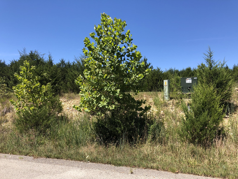 000 Mills Hollow Road Branson, MO 65616