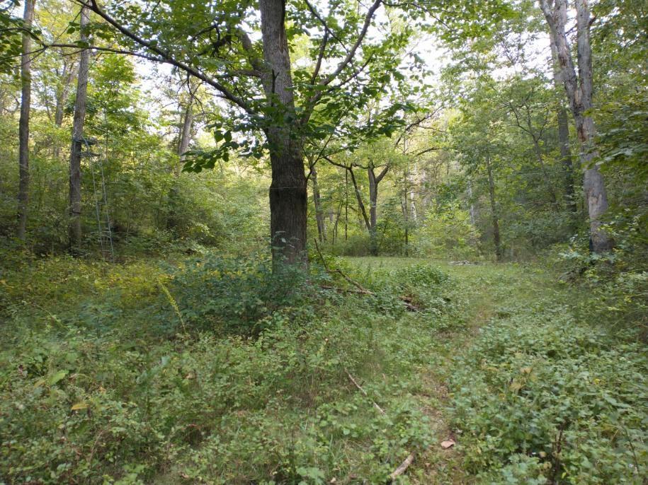 1174 State Hwy Reeds Spring, MO 65737