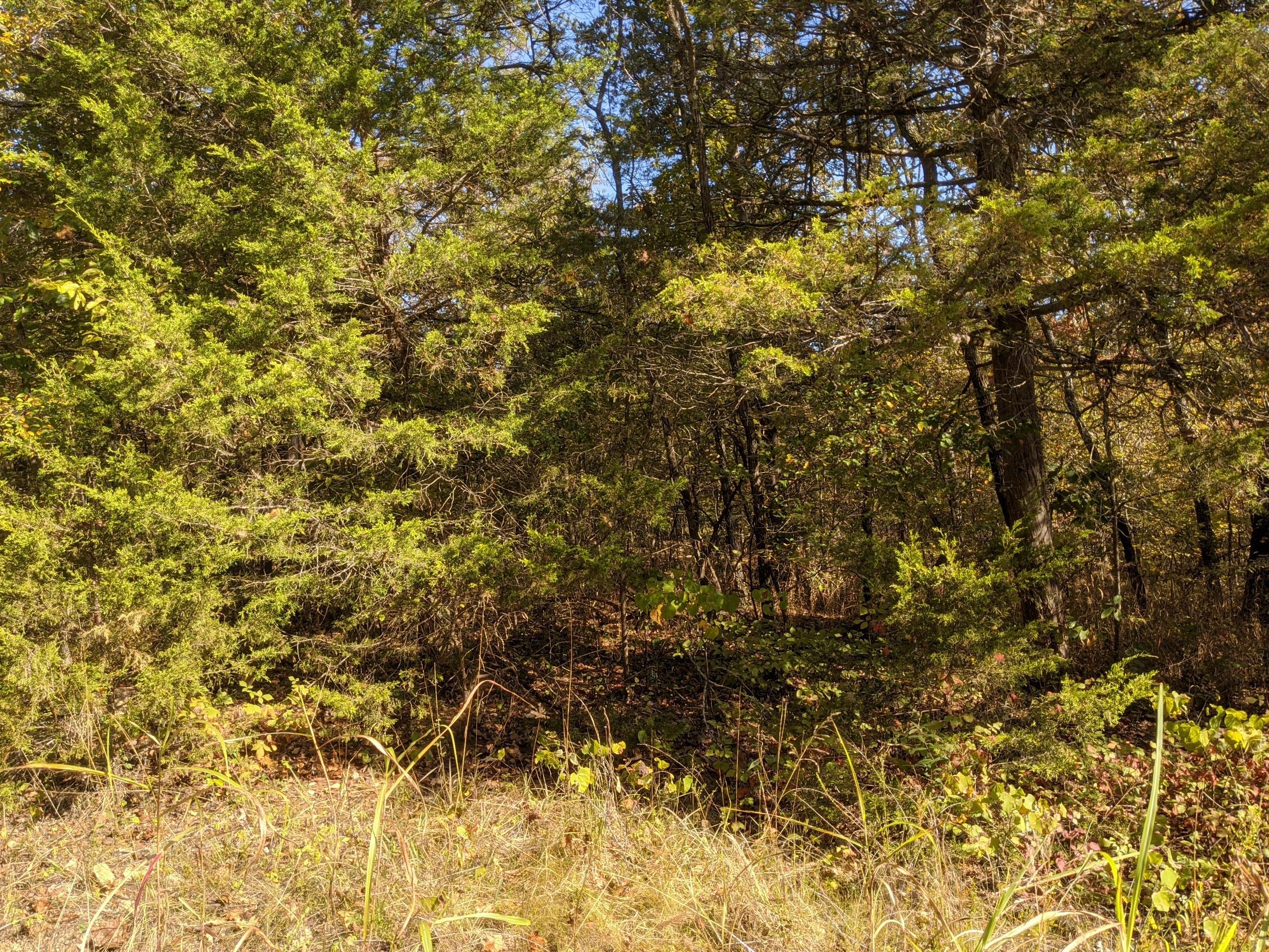 1012 Woodhurst Dr. Merriam Woods, MO 65740