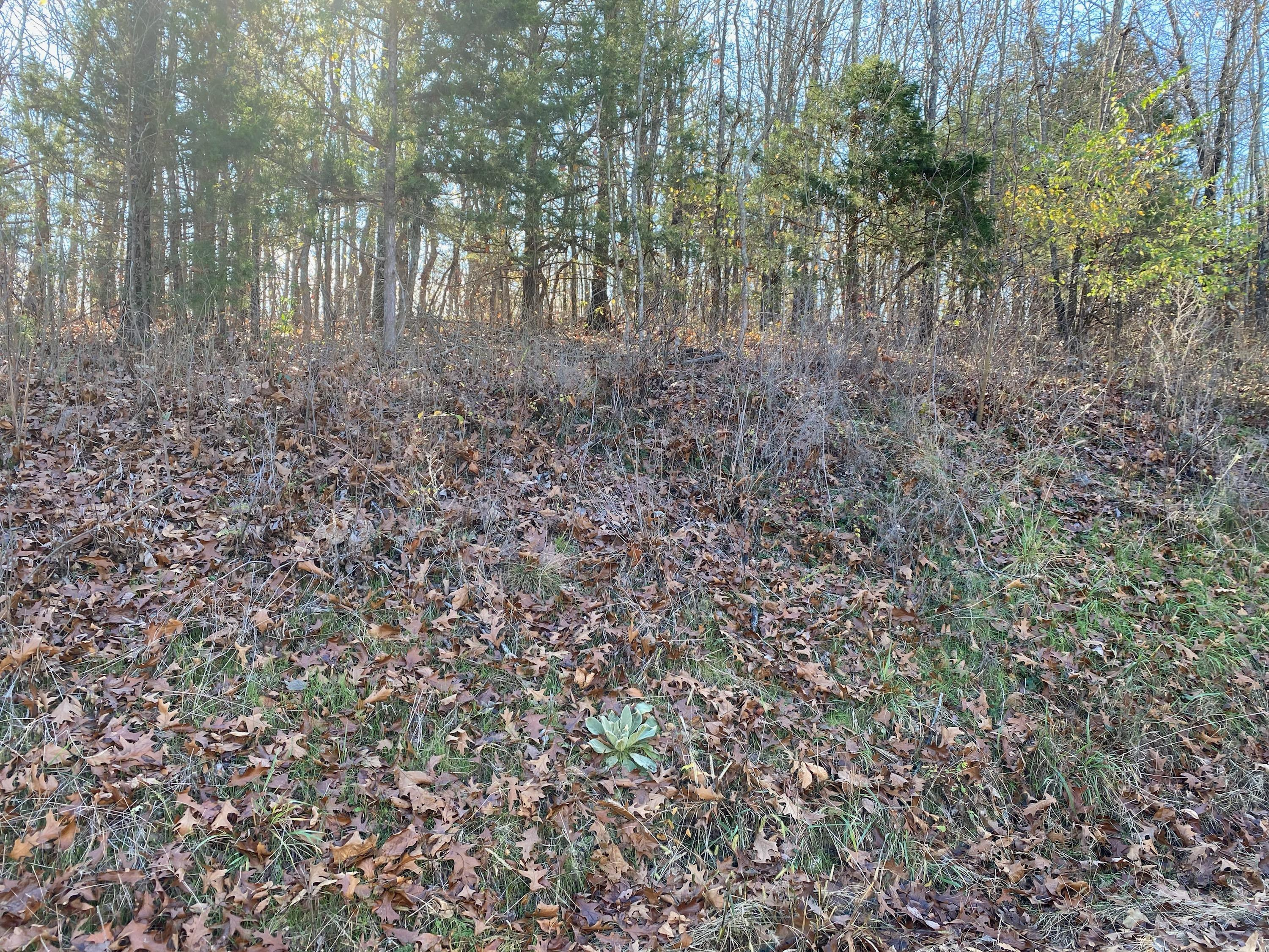 Lot 24 Ranchview Road Ridgedale, MO 65739
