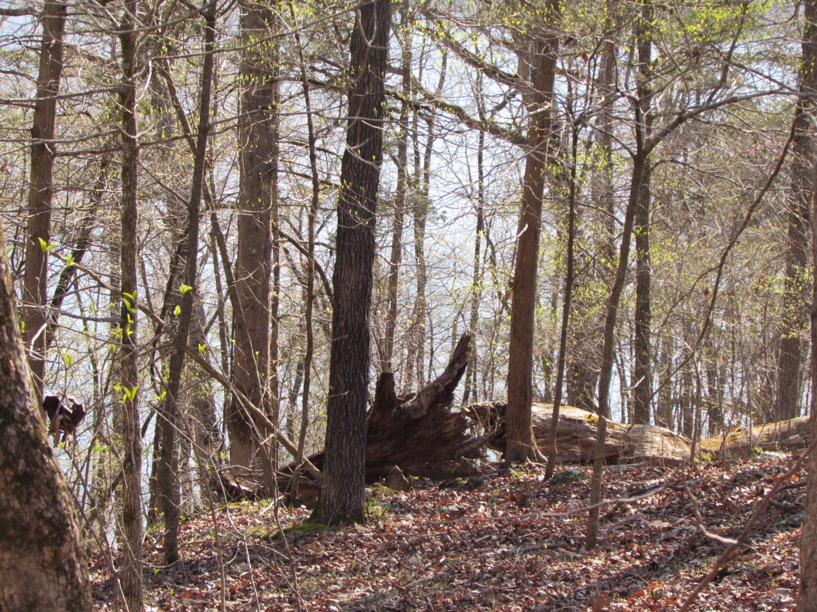 276 Rocky Point Loop Branson, MO 65616