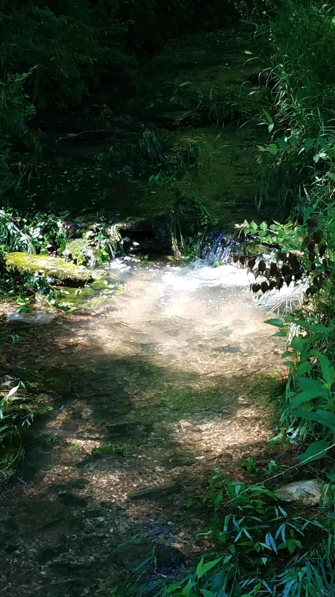 4729 South Hidden Tree Lane Battlefield, MO 65619