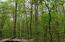 Wooded lot for privacy