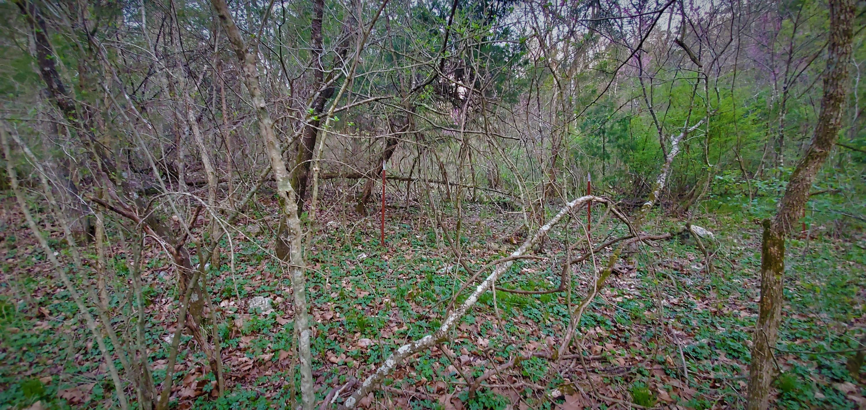 321 Blackberry Lane Ridgedale, MO 65739