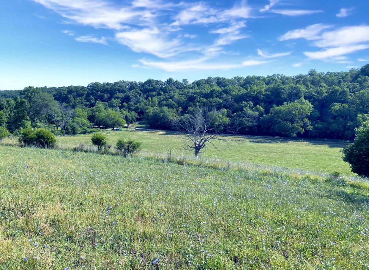 Buckeye Road Sparta, MO 65753