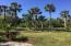 This is the backyard!!! Huge yard with beautiful palm trees. Plenty of room for a pool, fire pit, play area, pets, and more!