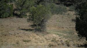 26000 Middle Fork Trail- Widow Woman, Lot #240, Trinidad, CO 81082