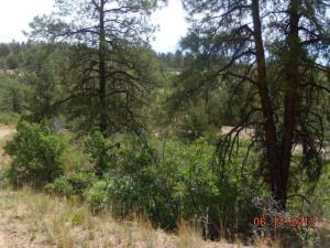 Elk Run, 230, Weston, CO 81091