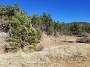 Big Pine Ranch, Lot 58, Weston, CO 81091