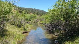 Tommy Creek