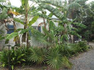 LUSH TROPICAL LANDSCAPING