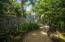 Lush tropical walk way