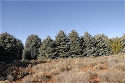 252 Meadow Lark Sedona, AZ 86336